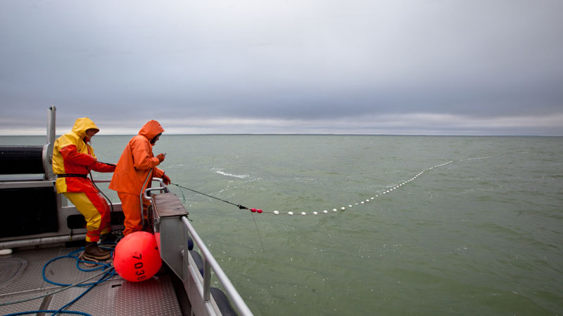 Bristol Bay Setnet fishing