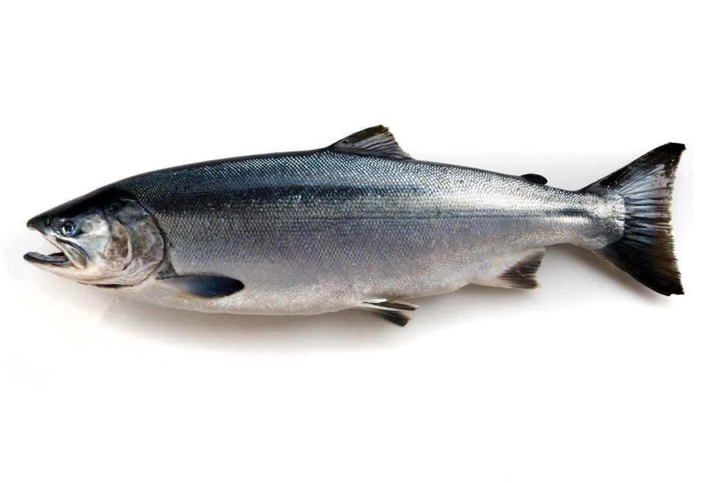 Seafood Species Alaska Seafood