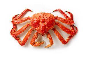 King Crab photo on white background
