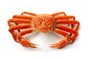 Snow Crab photo on white background